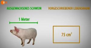 37g_schwein1