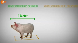 37g_schwein2