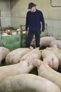 Landwirt Bernhard Barkmann in seinem Schweinestall in Messingen, in dem rund 1700 Tiere leben. Foto: Matthias Petersen