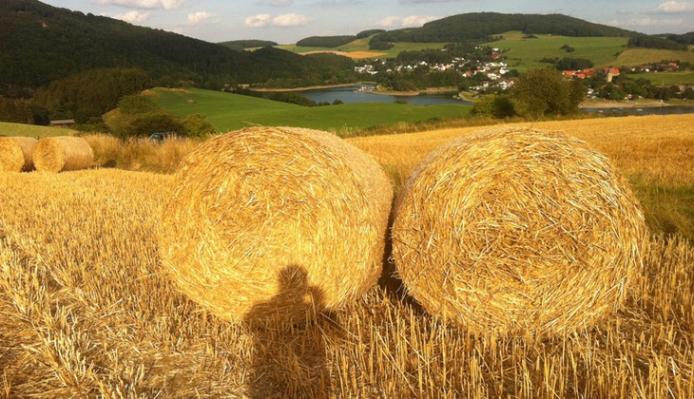Ab 1.Juli 2015 verschwinden Rundballen von der BildflächeFoto: Waldecker Tagblatt
