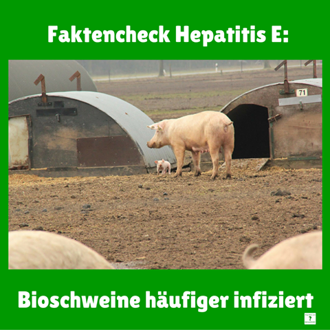 fdl_hepatitis_e