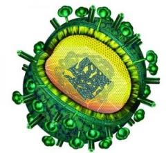 © Helmholtz-Zentrum für Infektionsforschung