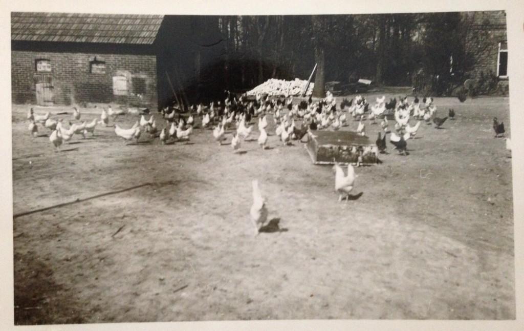 Hühnerhaltung vor über 80 Jahren