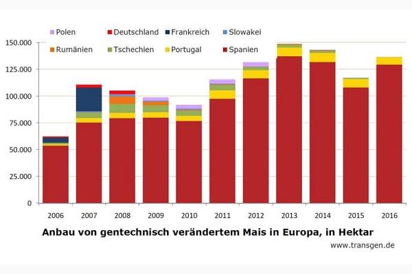 Anbau gentechnisch verändertem Mais ist in der EU gering. Er konzentriert sich in Spanien und Portugal.