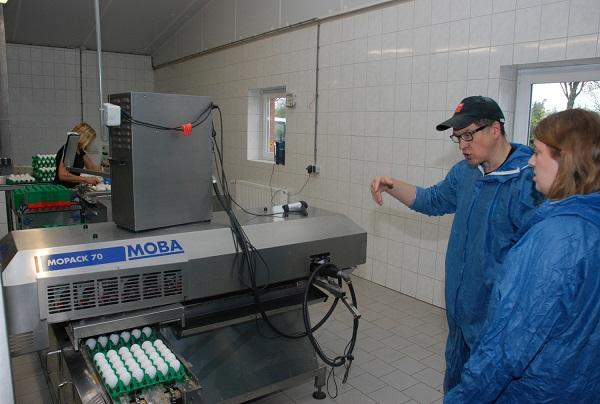 Gleich im Erzeugerbetrieb wird jedes Ei mit einem Herkunftsstempel versehen