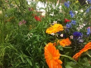 blühender Blumen auf der Internationalen Grünen Woche in Berlin