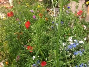 blühende Blumen auf der IGW