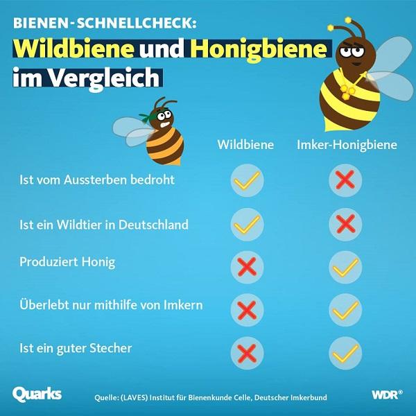 Die Bienen sterben, heißt es – sogar die Bundeskanzlerin Angela Merkel spricht inzwischen davon. Und ja es stimmt, einige Wildbienenarten gelten als gefährdet. Die Honigbienen in Deutschland sind aber nicht vom Aussterben bedroht – solange es Imker gibt, die sie pflegen.
