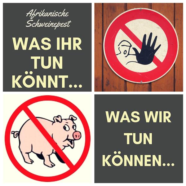 Afrikanische Schweinepest, was ist zu tun?