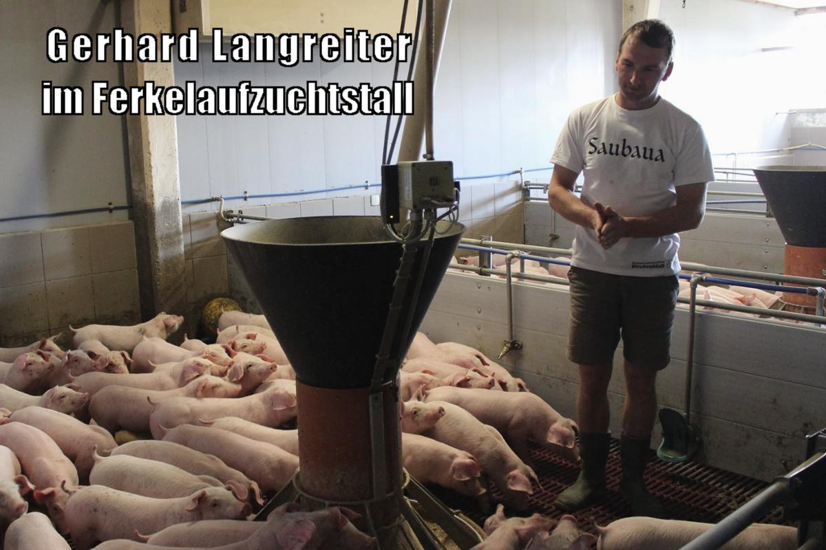 Gerhard Langreiter steht bei seinen Ferkeln im Ferkelstall