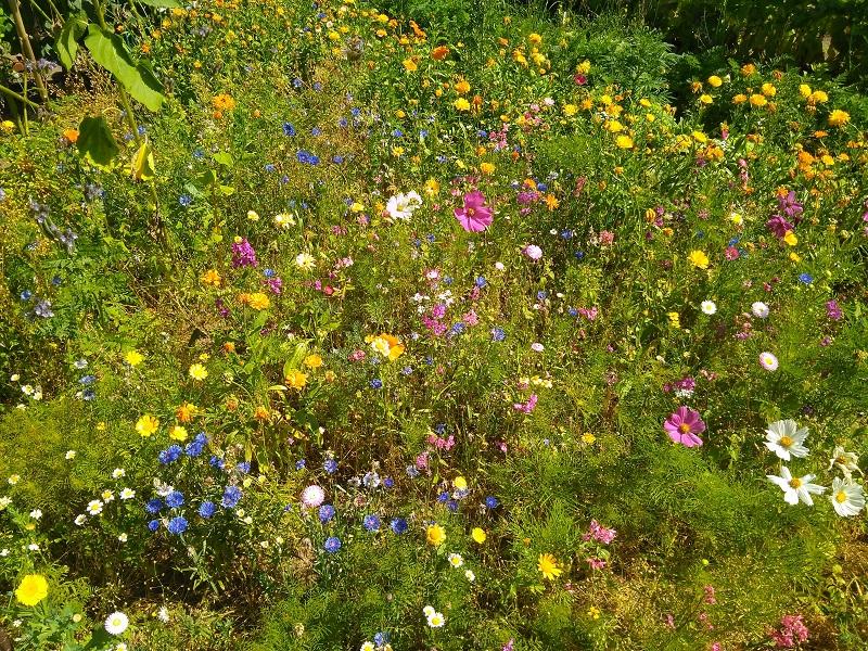 Dieser Blühstreifen blühte im Jahr 2018 sehr bunt. Die meisten Blühstreifen hatten allerdings mit der Dürre zu kämpfen