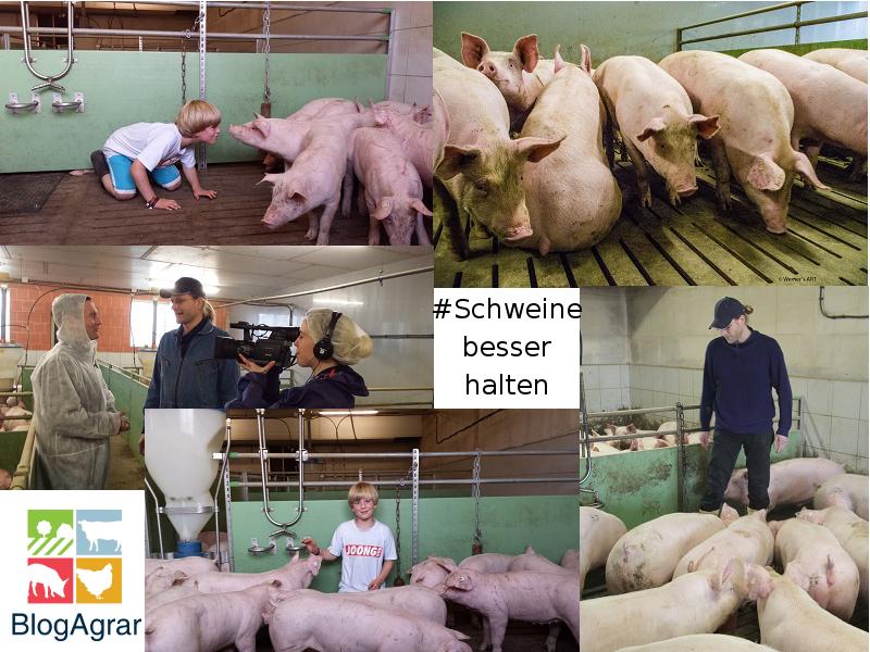 Collage mit Bildern aus dem Schweinestall von Bernhard Barkmann