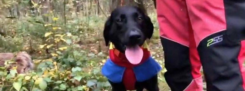 Mit Suchhunden gegen die ASP